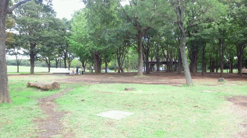バーベキュー広場の樹木