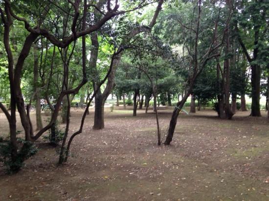 栗山公園3